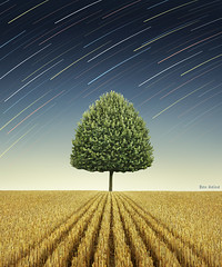 Newton's Apple Tree (Ben Heine) Tags: longexposure cambridge summer sky sun tree field leaves rain season print stars countryside vanishingpoint corn university track colours couleurs background space perspective champs pluie philosophy brain science nikond70s falling digitalpainting telescope intelligence galaxy revolution planet unknown physics mathematics astronomy dust universe campagne arbre depth cosmos astrology espace contrejour isaacnewton appletree toiles pomme gravitation milkyway bl 1666 startrail cerveau heliocentrism mywinners benheine galile toilesfilantes braives nicolascopernic newtonsapple photonumrique poussiredtoile superstarthebest flickrunitedaward obramaestra somanystarsoutthere newtonshead infotheartisterycom