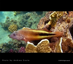 Marsa Halam - Diving (Andrea Costa Creative) Tags: desktop sea wallpaper fish macro tree art nature water closeup illustration photoshop canon painting creativity photography design interesting marine paint underwater arte post graphic background postcard sub creative myspace powershot comunicazione explore concept retouch ideas retouching disegno sx1 grafica facebook immersion linkedin interessi comunication photorealistic postprocessing fotoritocco windflower bestphoto photoretouching illustrazione metadesign fotorealismo ritocco netlog andreacosta sx1is sx1best actheart socialimg