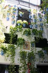 Patio a Malaga (Matteo Bimonte) Tags: y el patio tapas andalusia malaga bodegas spagna vinos pimpi