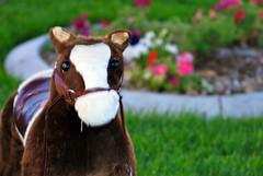 DSC_0170 (Cary Veech) Tags: horse toy pony ponyplay horseyplay