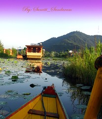 House Boat Jamaica, in Daal Lake (Sunciti _ Sundaram's Images + Messages) Tags: estrellas 1001nights discovery dazzling bestshot wonderoftheworld brightspark blueribbonwinner kaledioscope beautifulchild 10faves 5photosaday abigfave enstantane concordian anawesomeshot colorphotoaward impressedbeauty aplusphoto agradephoto flickraward diamondclassphotgrapher diamonclassphotographer flickrdiamonds eperke brillianteyejewel concordians awesomescenery flickrestrellas brilliantphotography fabulousflicks flickrovertheshot abovealltherest allaboutsun elitephotgraphy artofimages flickrmasterpieces greatshotss capturethefinest mawesomescenery veryimportantphotos firelightedphotos artofatmosphere 1001nightsrainbowmagicabigfave