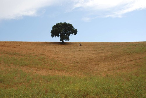 a tree standing alone in a large field