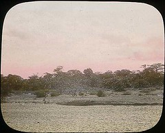 Locust storm (The Field Museum Library) Tags: africa expedition mammals somalia zoology 1896 carlakeley specimencollection dgelliot
