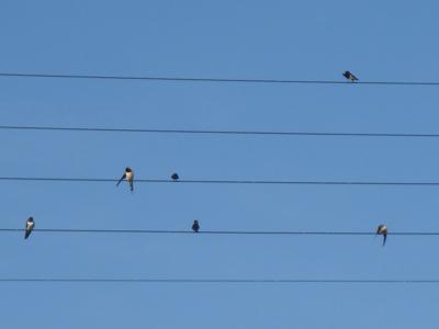 birdmusic5