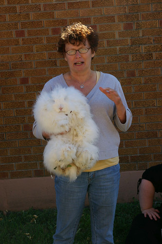 What Not To Do with an Angora Bunny