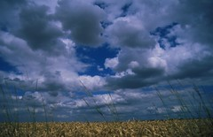File0081 (Der Wunderbare Mandarin) Tags: sky france film alex barley clouds fields crops brooding scanning heavy slides plain chartres vast pleine justclouds sunskyclouds euresetloire stormyfujivelvia50