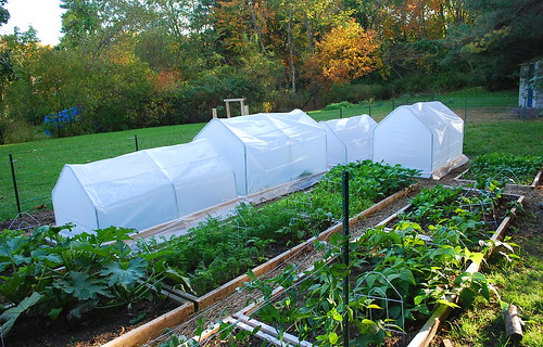 mini hoop houses