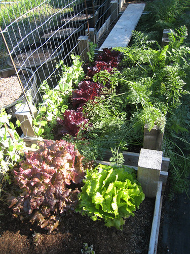 End of Veggie Garden 2009