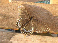 Butterfly on Bench