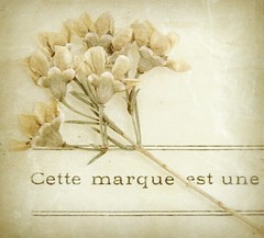 Pressed Between Pages (luvpublishing) Tags: flowers texture vintage french antique overlay romantic picnik deadflowers driedflowers layered vintagepaper pressedflowers artistictreasurechest magicunicornverybest magicunicornmasterpiece softdreamyandethereal