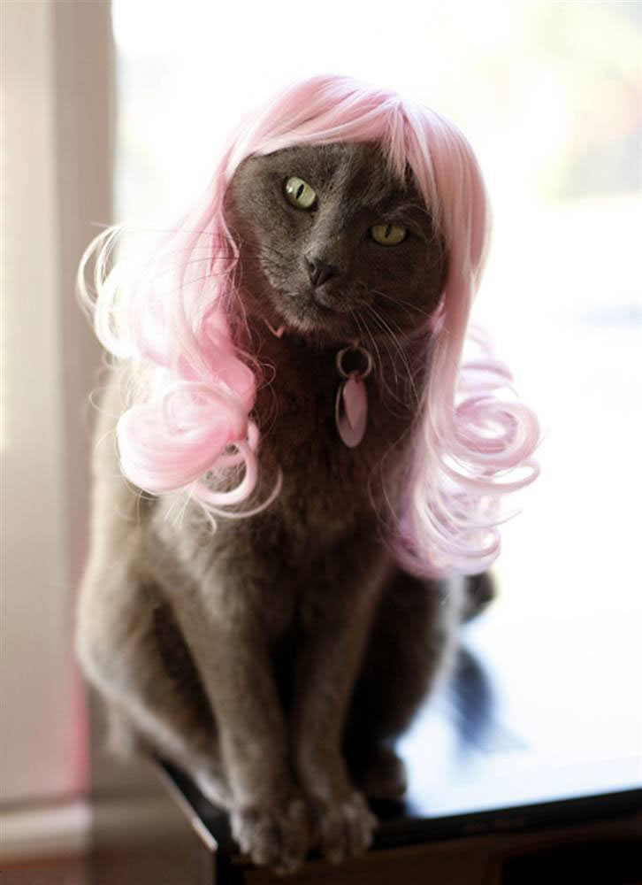 cat-glamour-03