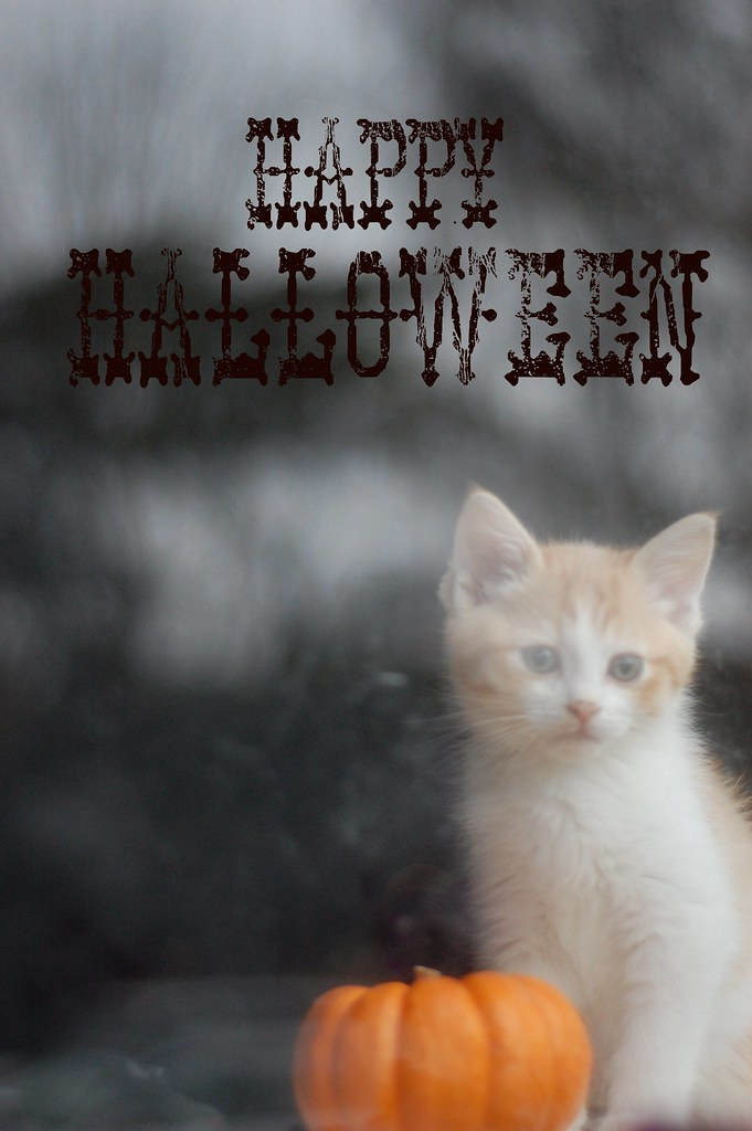 Happy Halloween from the Itty Bitty Kitty Committee!!