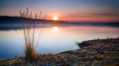 04:59 (Aleksandr Matveev) Tags: morning nature water river landscape dawn morninglight dof bokeh sommer north contax cz manualfocus 1000 3514 distagon colorphotoaward yourwonderland czcontaxdistagon3514 harmonyplacewiner sonyphotochallenge