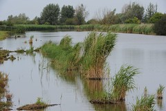 DSC_3962 (Jaap van den Broek) Tags: buizerd oostvaarderplassen