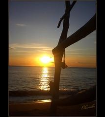 Un saluto dal sole in maremma........... (marina bertone) Tags: marina tramonto mare cielo toscana tronco spiaggia maremma riflesso passeggiando ondina nuvolette mieiocchi tramontodautunno spiaggiadellosa ingirula marinablu allegrisinasceosidiventa kernotart adoroquestaspiaggia lauraedio illuccichiodellasabbia