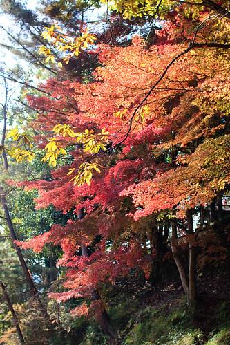 11.08 Ojiyama Park - Sasayama2