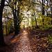Woodland Path - T.P. Woods
