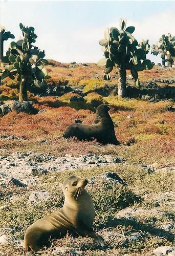 Galapagos- South Plaza (5)