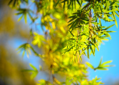 Sentimental tenderness (.I Travel East.) Tags: life light leaves louisiana bamboo batonrouge gift zen tenderness sentimental sentimentaltenderness happybirthday~deardiane