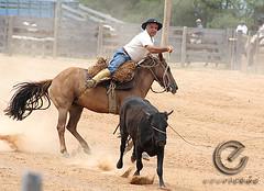 IMG_6187 (Edu Rickes) Tags: brazil horses brasil caballos rodeo cavalos rs riograndedosul gaúchos gaúchas beautifulshots piratini gineteada canon450d brazilianphotographers fotógrafosbrasileiros tirodelaço todososdireitosreservados fotógrafosgaúchos culturagaúcha edurickes belasimagens rodeiogaucho edurickesproduçõesfotográficas canonrebeldigitaleosxsi copyright©2010 fotografiaslegais