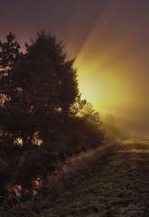 Artificial Sunrise or UFO ?? (janusz l) Tags: light tree lamp fog photoshop sunrise geotagged large artificial ufo study hdr blending 010724 cs3 photomatix janusz leszczynski impressedbeauty silverefexpro geo:lat=49094722 geo:lon=122866287