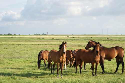 Horses by David Feltkamp, on Flickr