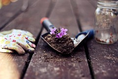 6/100 (AmyJanelle) Tags: flowers summer 6 flower garden 50mm gardening tools dirt jar summertime shovel six trowel canonrebelt3i