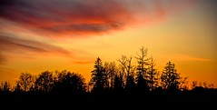 Close encounters of the third kind (Images by Christie ♪♫ Happy Clicks for 2017 !) Tags: silhouette evening nightphotography bc canada orange tangerine tree trees colourful colorful outdoors clouds westcoast 晚年日没晚霞日落夕阳 sonnenuntergang tramonto elatardecer zonsondergang