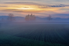 Foggy landscape - explore (Rita Eberle-Wessner) Tags: landscape landschaft nebel fog acker feld acre tree trees baum bäume sonnenaufgang sunrise sky himmel odenwald