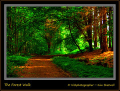 The Forest Walk (Irishphotographer) Tags: trees green walking quiet peace path walk atmosphere tranquil 4thjuly peacefull kinkade beautifulireland colorphotoaward imagesofireland colourartaward theforestwalk kimshatwell irishphotographer breathtakingphotosofnature beautifulirelandcalander wwwdoublevisionimageswebscom