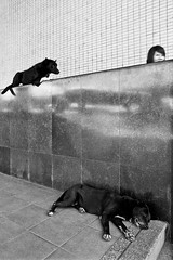 """hounded - Bangkok, city of angels and angles and many...many dogs by Sailing """"Footprints: Real to Reel"""" (Ronn ashore) -"""