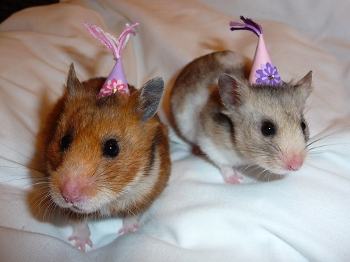 Party hamsters