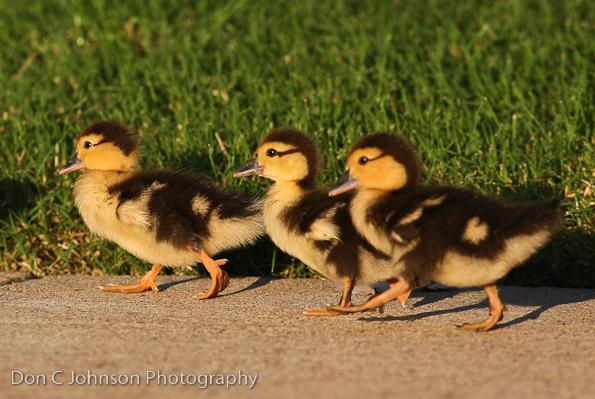 duckpond-129