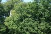 IMGP3399 (strongwater) Tags: dave jan bo velbert klettern witte klimmen svenja ilka luza strongwater waldkletterpark