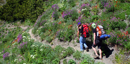 juan and keith do wildflowers