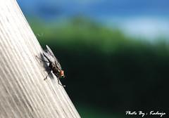 ذبابه ..!!