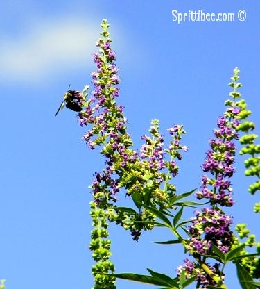 nl-bee