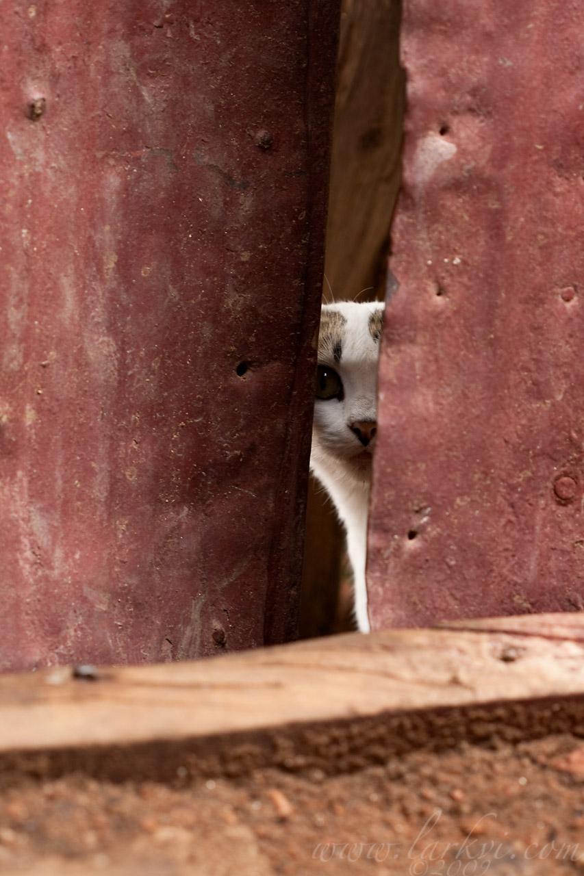 Cat #4(b), Harar, Ethiopia, July 2009