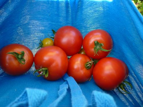oh, tomato