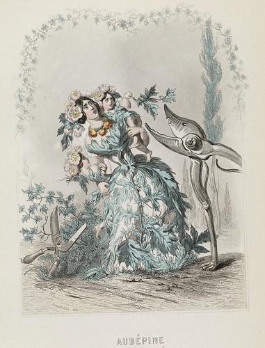 Aubépine - Les Fleurs Animées - JJ Grandville