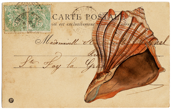 Sea Shell Postcard