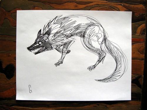 Coyote stalks