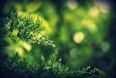 We're Just Getting Started. (Aubirdy) Tags: macro green nature leaves rain lens droplets drops nikon dof bokeh raindrops tamron 90mm aubrey d60 bokehlicious aubirdy bokehrama hggt gorgeousgreenthursday