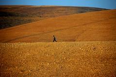 Life and Survival #3 (stedef) Tags: trek loneliness morocco marocco fields ohhh ontheway campi solitudine cammino versocasablanca towardscasablanca
