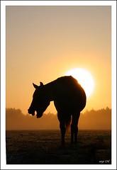 Rveil difficile... (windtalker40) Tags: horses cheval chevaux