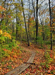 Oberg Mountain Loop (siskokid) Tags: autumn color fall leaves minnesota northshore soe superiorhikingtrail highway61 tofte omot obergmountain platinumheartaward