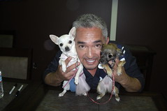Cesar Millan with ZuZu and Teddy (cerberus_arstd) Tags: dog chihuahua cute dogs cesar chihuahuas zuzu cujo millan whisperer