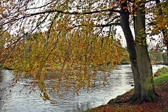 Down To The River (saintinexile) Tags: ireland winter colour tree river kildare alisonkrauss