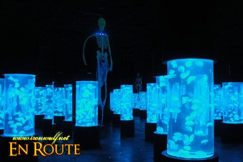 Manila Ocean Park Jellyfish Tubes