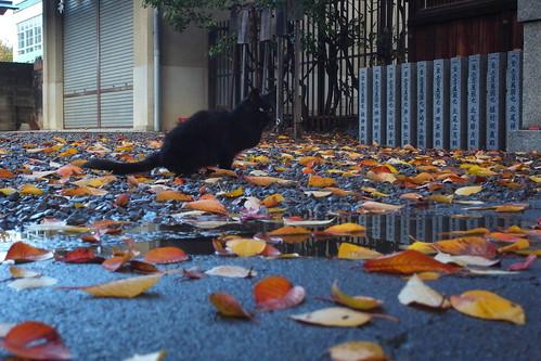 Today's Cat@20091125